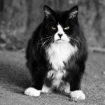 猫が演じるハードボイルド『ルドルフとイッパイアッテナ』